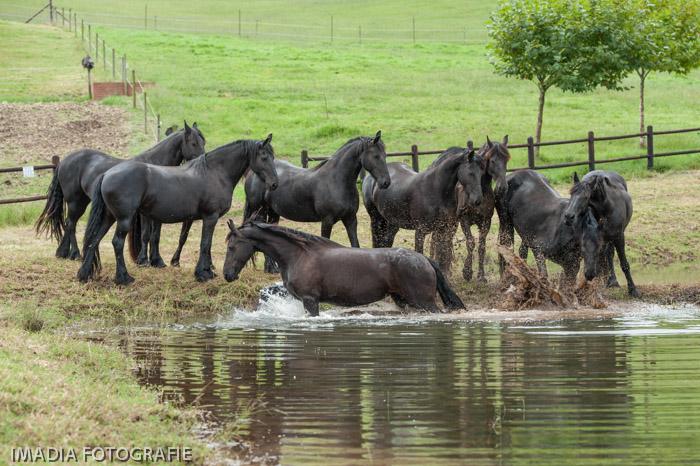Millford Farm - Kwazulu Natal