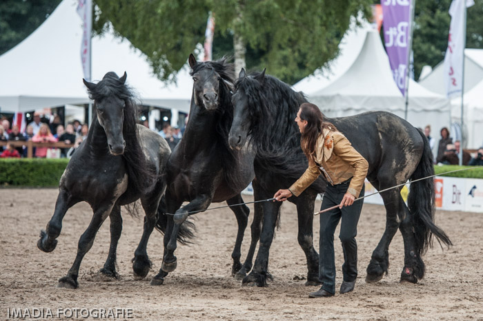 Pignon and his Friesians, harmony