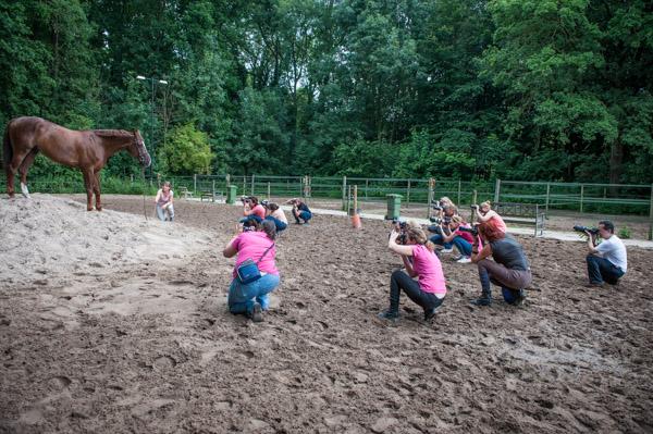 Cursisten van de workshop paardenfotografie aan het werk.