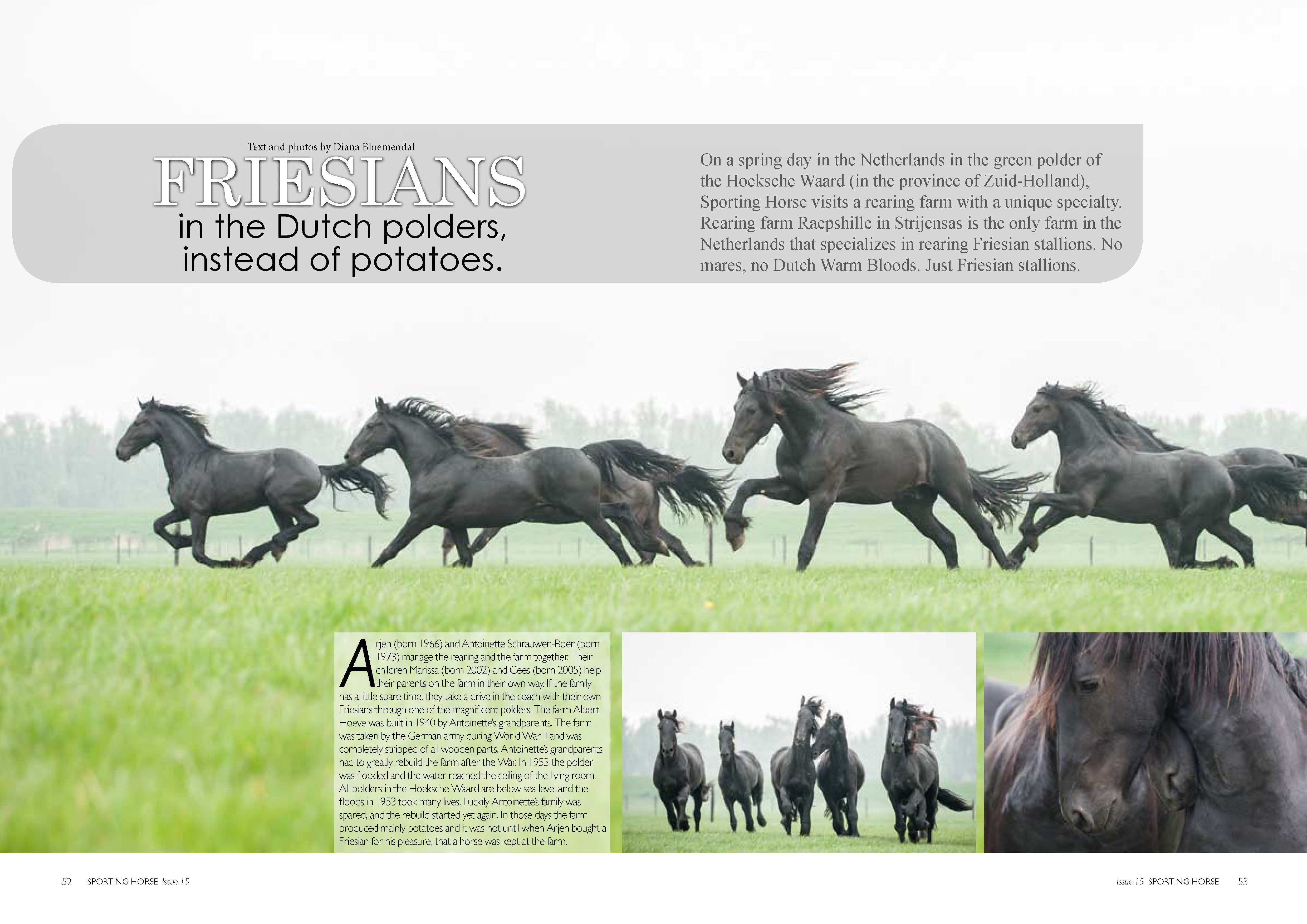 Friesians_Page_1