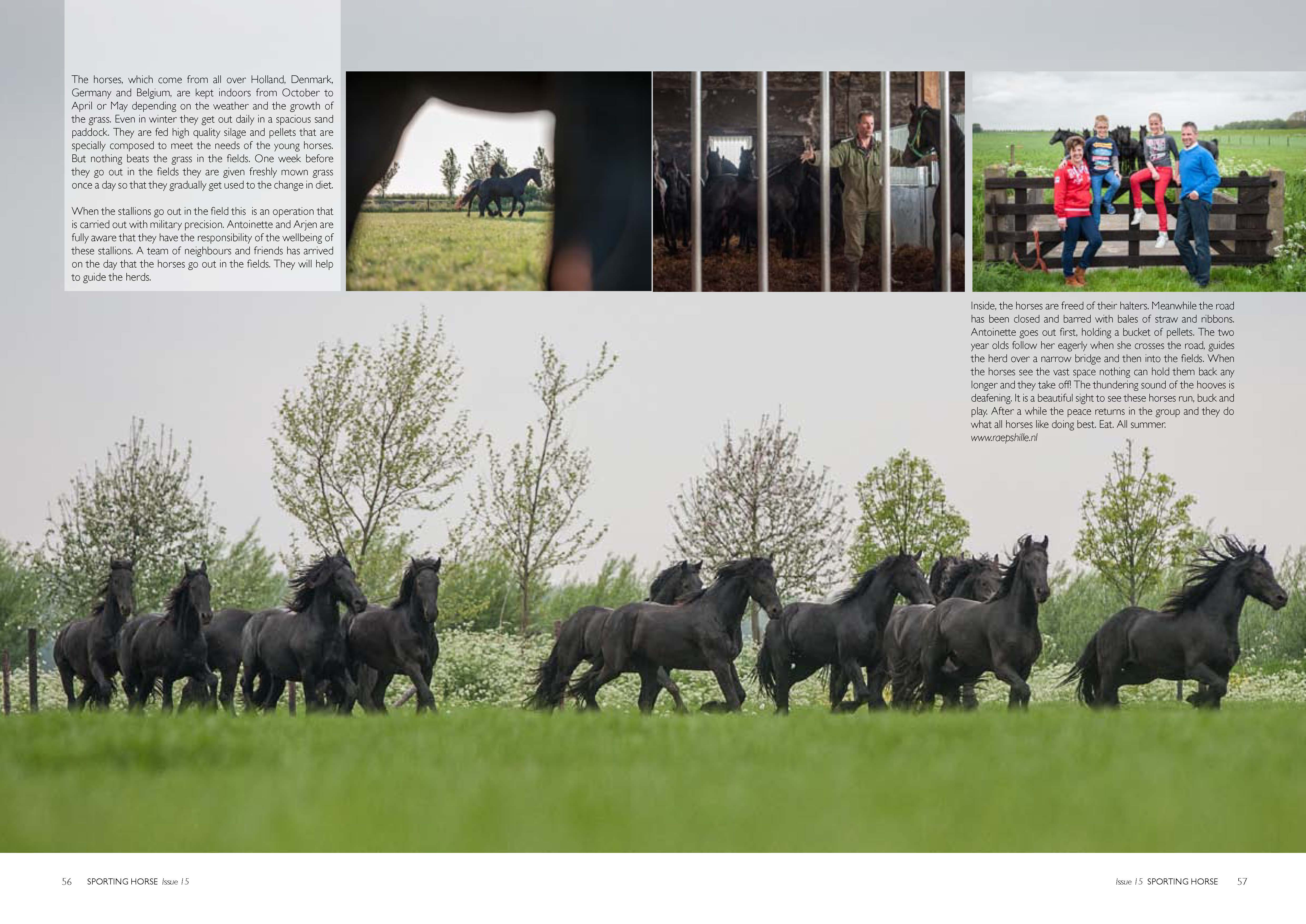 Friesians_Page_3