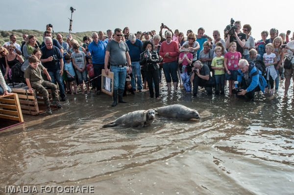 aseal zeehonden opvang stellendam-16