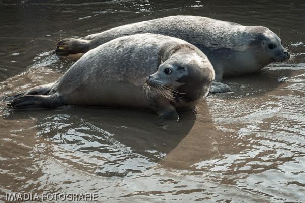 aseal zeehonden opvang stellendam-17