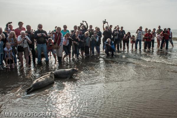 aseal zeehonden opvang stellendam-18