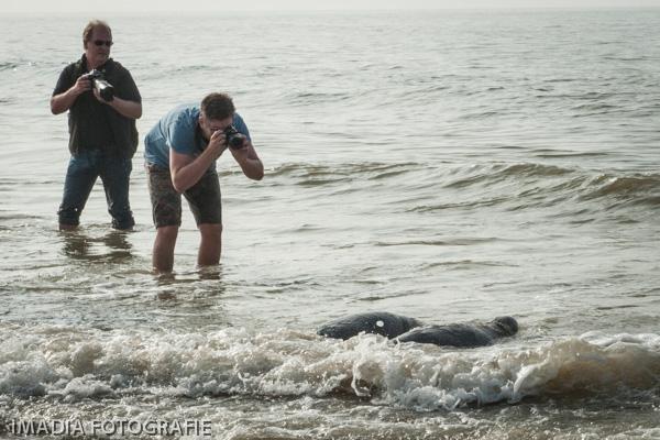aseal zeehonden opvang stellendam-20