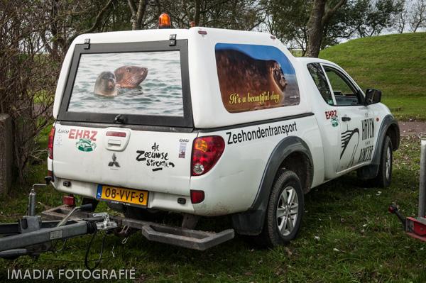 aseal zeehonden opvang stellendam-8