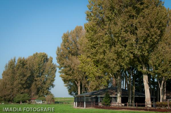 TC Dutch Sporthorses oktober 2014-10
