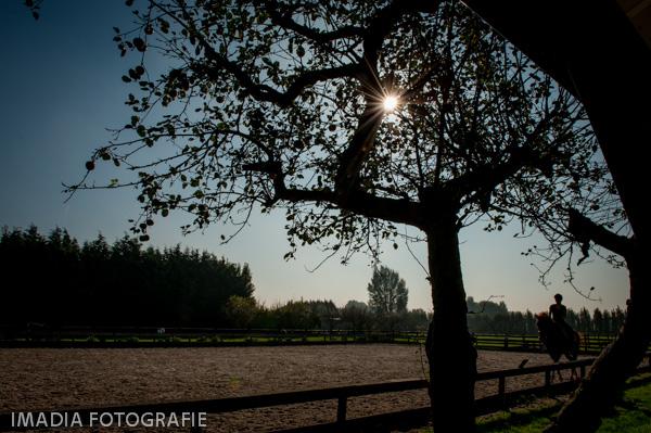 TC Dutch Sporthorses oktober 2014-11