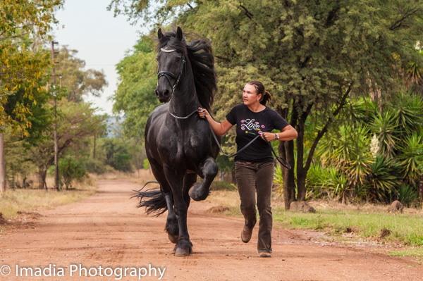 Doorndraai Friesian Stud, South Africa